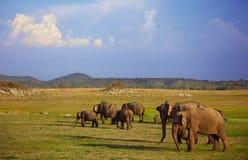 Savuti Marsh Africa Photographie stock libre de droits