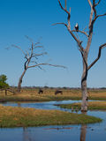 Savuti marsh Stock Photography