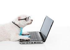 Savvy dog using a computer laptop Stock Photos