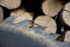 Saw circular saw blade at wood. Stock Photos