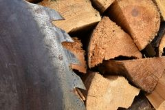 Saw circular saw blade at wood. Stock Photography