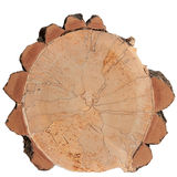 Saw cut tree trunk isolated Royalty Free Stock Photography