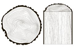 Saw cut tree trunk vector tree, annual rings monochrome. Stock vector illustration Stock Illustration