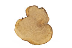 Saw cut of a tree on white. Tree annual ring circle wood isolate on white background Royalty Free Stock Photo