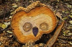 Saw cut wood owl Royalty Free Stock Image