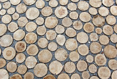 Saw cutted trees rounds laying on the ground Stock Photography