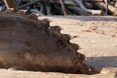 saw för bladcircularclose som skjutas upp Cirkelsåg på träbakgrund med dagsljus royaltyfria foton