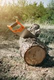 Saw in a log outdoor. Sawing wood for campfire in the forest. Cutting log of wood timber to making campfire on nature. Picnic, lumberjack, tree, felling, work stock image