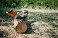Saw in a log outdoor. Sawing wood for campfire in the forest. Cutting log of wood timber to making campfire on nature. Picnic, lumberjack, tree, felling, work stock images