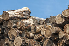 Saw logs Stock Photo