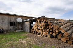 Saw logs,trees. Saw logs at an Amish saw mill in Michigan USA stock image