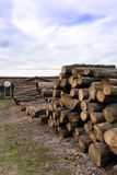 Saw logs,trees. Saw logs at an Amish saw mill in Michigan USA royalty free stock photo
