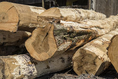 Saw logs,trees,saw mill,lumber. A pile of tree logs at an Amish saw mill in Holms county Ohio Royalty Free Stock Images