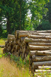 Saw round timber Royalty Free Stock Photo