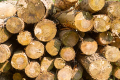Saw round timber Stock Images