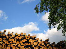 Saw-timber. Saw-timber on a background of the sky Royalty Free Stock Photography
