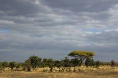 Sawanna afrykański krajobraz Obrazy Royalty Free
