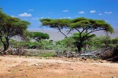 Sawanna krajobraz w Afryka, Serengeti, Tanzania Obrazy Royalty Free
