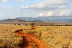 Sawanna krajobraz w parku narodowym w Kenya Zdjęcie Royalty Free