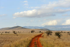 Sawanna krajobraz w parku narodowym w Kenya Obrazy Stock