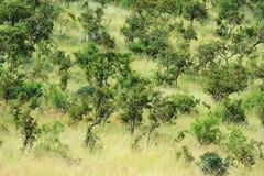 Sawanna krajobraz w parku narodowym w Kenya Zdjęcie Stock