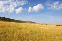 Sawanna krajobraz w parku narodowym w Kenya Zdjęcia Stock