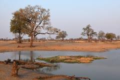 Sawanna w afryce poludniowej zdjęcia stock