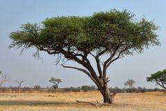 Sawanna w afryce poludniowej zdjęcia royalty free