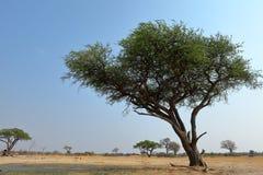 Sawanna w afryce poludniowej obrazy stock