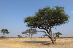 Sawanna w afryce poludniowej obraz stock