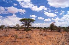 Sawanna w Tsavo parku narodowym Afryka Zdjęcia Stock