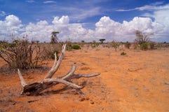 Sawanna w Tsavo parku narodowym Afryka Zdjęcie Stock