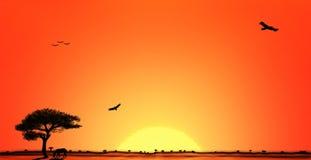 sawannowy afrykańska słońca Obrazy Royalty Free