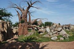 Sawannowy afrykanin Zdjęcie Stock