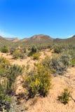 Sawannowy lasu krajobraz, niebieskie niebo i Zdjęcia Stock