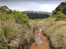 sawanny lasowa woda zdjęcia royalty free