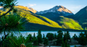 Sawatch mountain scene pine needles twin lake heaven. In colorado. Wilderness bliss mountain peaks green valley pi e trees and aspen trees stock images