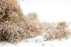 sawdust royaltyfria bilder