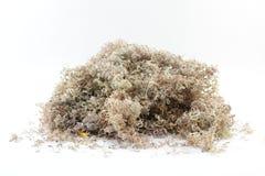 sawdust royaltyfri bild
