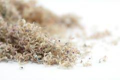 sawdust royaltyfri foto