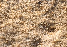 Sawdust as background. Photo of an abstract texture stock photo