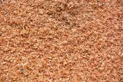 Sawdust background Royalty Free Stock Photography