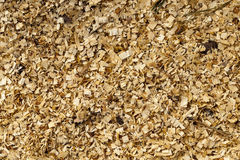 Sawdust close up Royalty Free Stock Image