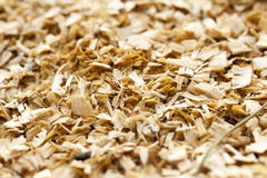 Sawdust close up Stock Images