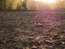 Sawdust and dirt in the sun. Path in the Park sprinkled with coarse sawdust, lit by the rays of the evening sun Royalty Free Stock Photo