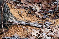 Sawdust in the forest tree cut. Detail piece leaves death Stock Photography