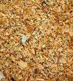 Sawdust on the ground. Stock Photo
