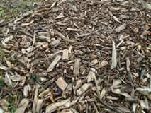 Sawdust and mulch bark background Stock Image