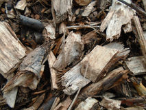 Sawdust and mulch bark background Royalty Free Stock Photography
