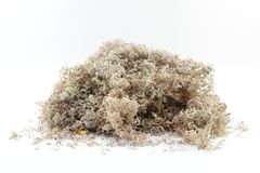 Sawdust. From sharpening pencil It looks like fine wood powder,  is very useful Royalty Free Stock Image